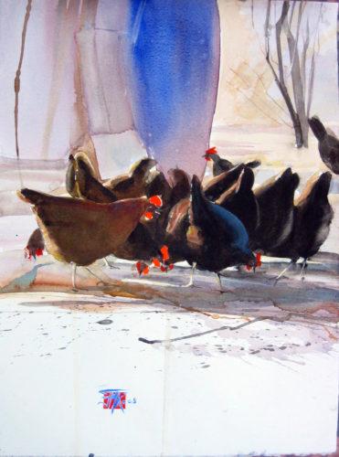 Poules d'hiver