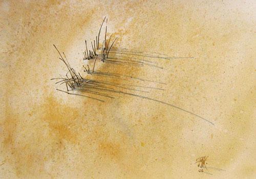 Les oyats ou le tambour des dunes