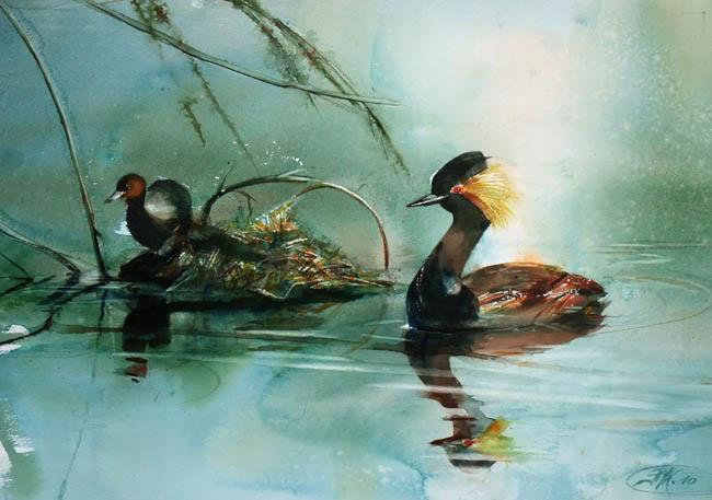 Le nid flottant du grèbe huppé
