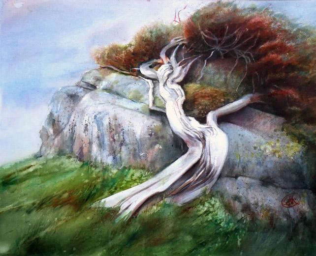 Juniperus, vent d'ouest